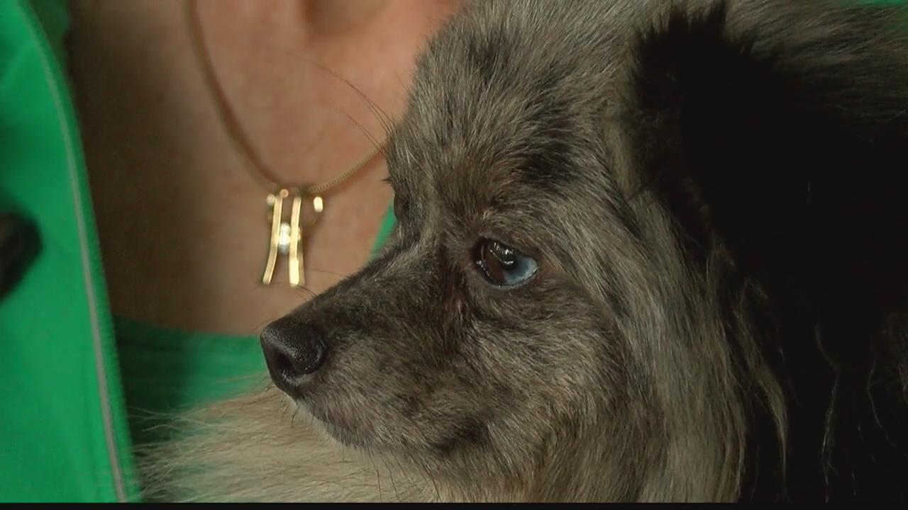 Rescue Brings In 42 Dogs In Weddington Fox 46 Charlotte