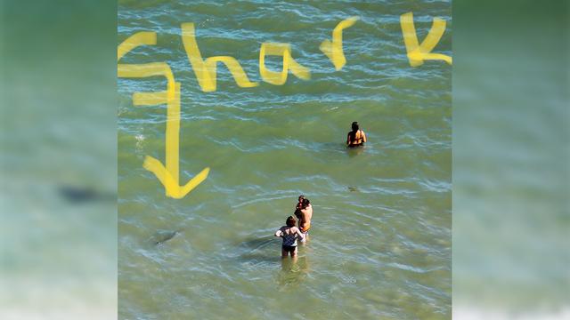 Unnerving Photos Reveal Sharks Just