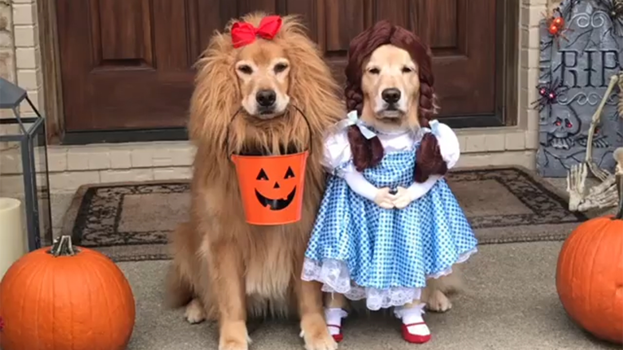 Dogs dressed as Dorothy and the Cowardly Lion from 'The Wizard of Oz' go  viral – FOX 46 Charlotte
