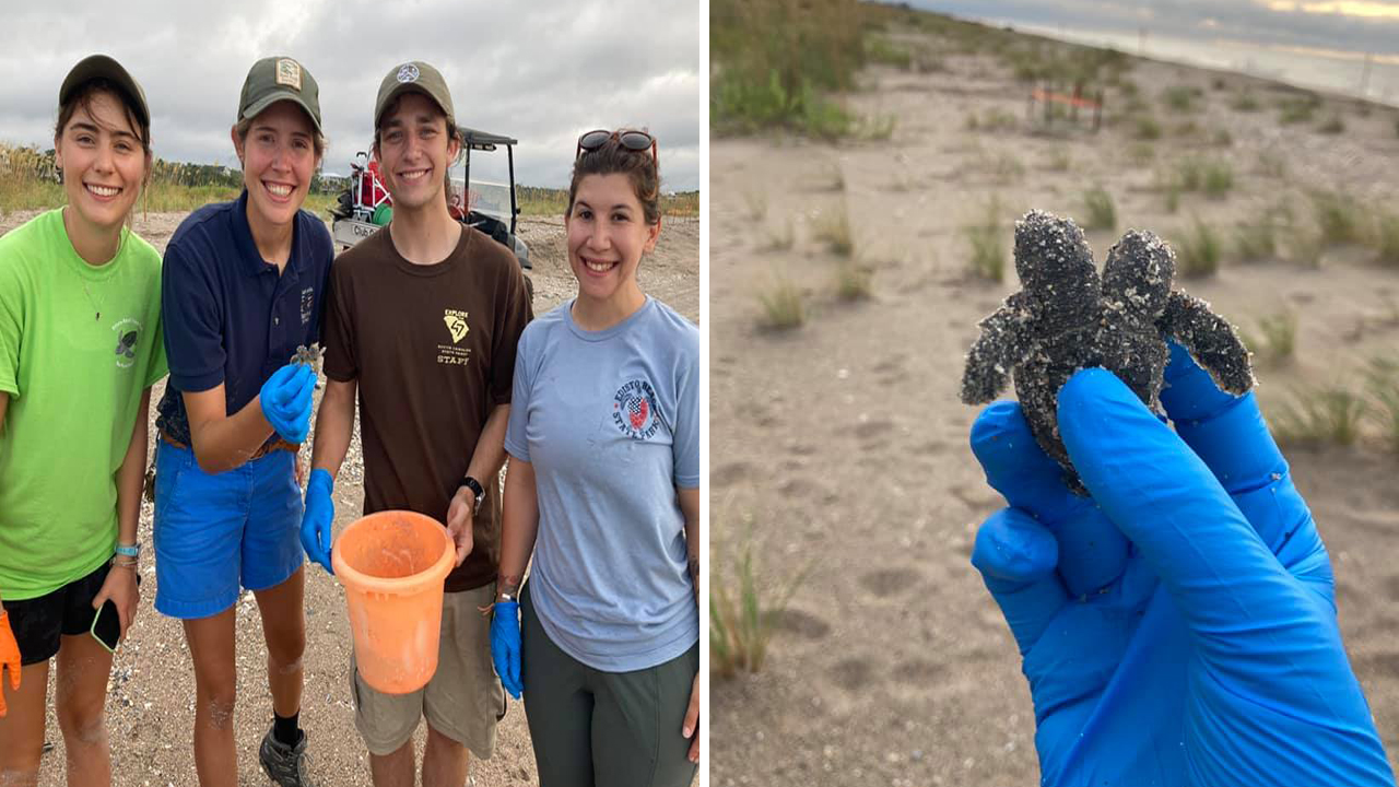 Very rare find.' Two-headed sea turtle hatchling discovered at Edisto Beach  State Park in South Carolina